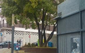 el almez de la plaza Arcipreste Juan Hernández